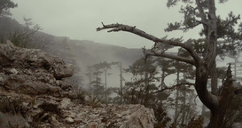 evening fog shrouded mountain spring forest view from the top Footage