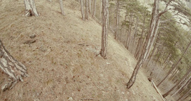 View From The Middle Of A Hill Overgrown With Pine Trees In The Mist Of The Moun stock footage