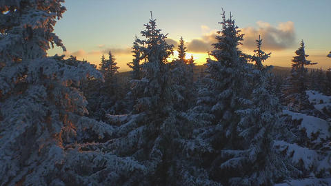 AERIAL: Frozen Winter Forest At Sunset stock footage