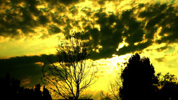 Clouds. Sunrise. Silhouettes of trees. Pan Footage