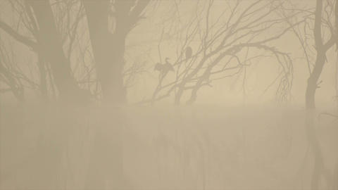 Cormorant on the tree through the fog Footage