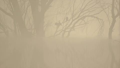 Cormorant on the tree through the fog Footage