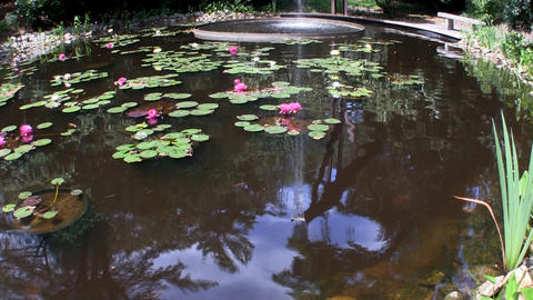 Reflected sky in flume fountain waterfall of oval pool with lotus flowers at Her Footage