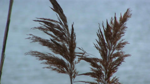 Marsh Grass River Background stock footage
