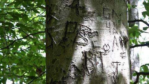 Tree initials carved Thornton Burgess Green Briar Sandwich Cape Cod Footage