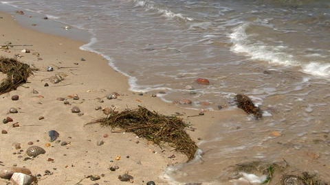 Rocky coast line, waves & seaweed Footage