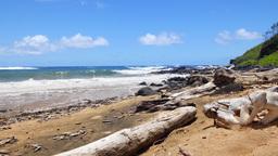 Driftwood on beach in Molokai Hawaii Footage