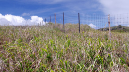 Grassy field in Hawaii Footage
