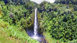 Akaka Falls Hawaii Footage