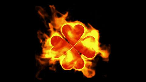 burning four hearts shaped quadrifoglio leaves,valentine's day Animation