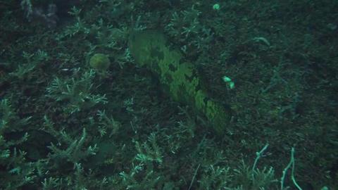 Honeycomb grouper Stock Video Footage