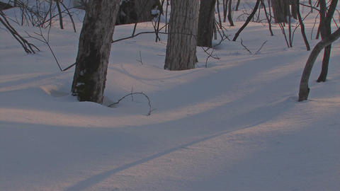 Winter Forest in Towada Lake,sunset time,Aomori,Japan Stock Video Footage