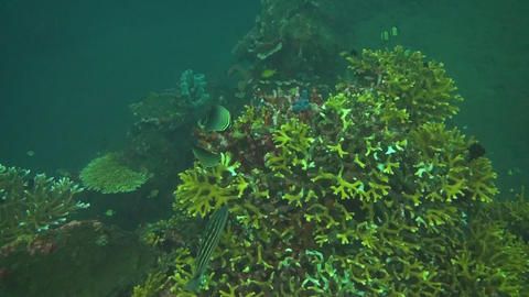 Small fish in the coral reef Stock Video Footage