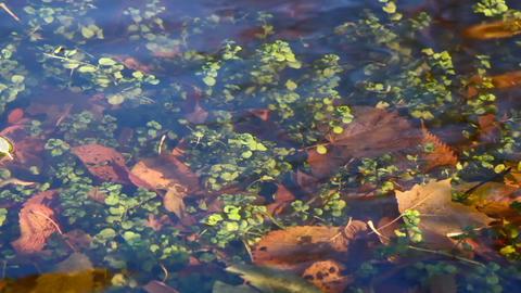 Plants under water Stock Video Footage