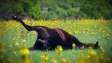 Dead cattle in meadow Footage