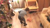 boy crash toy 01 Footage