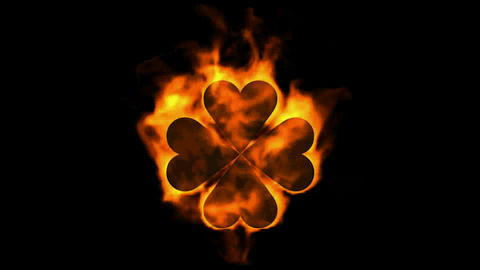 burning four hearts shaped quadrifoglio leaves,valentine's day Animation