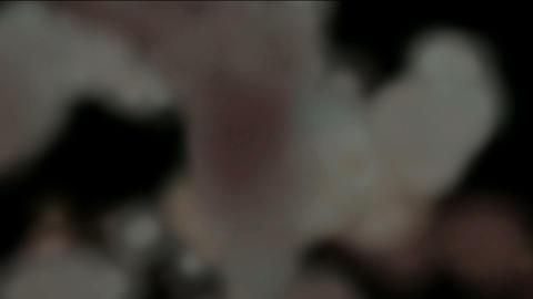 explosion Gray smoke Stock Video Footage