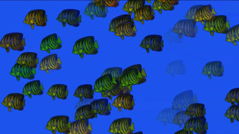 school of fish underwater at night Stock Video Footage