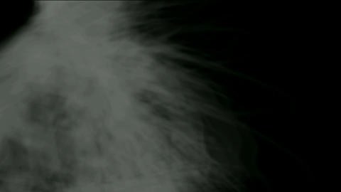 whirl smoke and cocoon fiber,spider silk,mist,cyclones Stock Video Footage