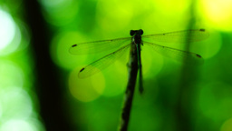 Silhouette of dragonfly resting on a branch, cleaning his face Footage