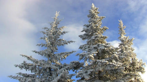 Mountain top snow covered pines Footage