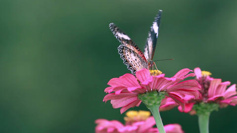 Butterfly And Insect 1