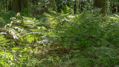 fern shrubs Live Action