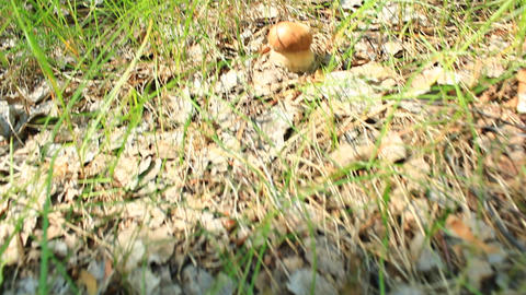 small cep in the grass Live Action