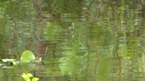 Green ripples & reflections Footage