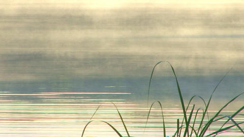 Pond Mist Rising; 3 stock footage
