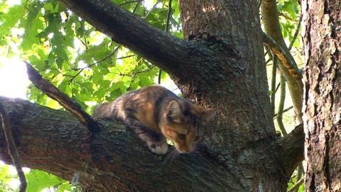 Kitten plans great tree escape; part 1 Live Action