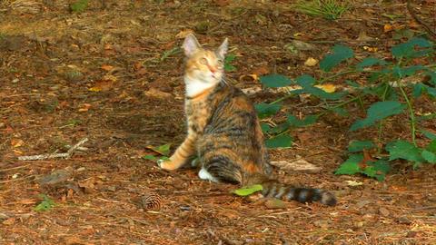 Kitten Cleaning stock footage