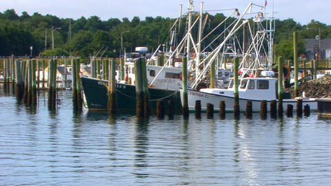 Fishing Boats in the Stillness Footage