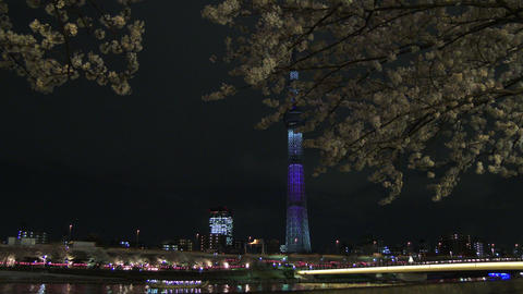 Hanami Cherry Blossom And Tokyo Sky Tree Light Up Viewing At Sumida River, Tokyo stock footage