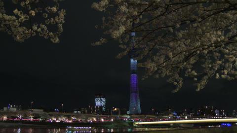 Hanami cherry blossom and Tokyo Sky tree light up viewing at Sumida River, Tokyo ビデオ