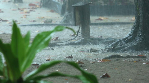 Tropical Downpour stock footage