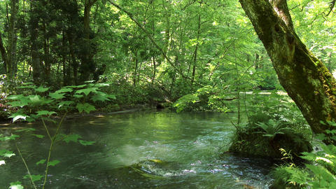 water stream and green forrest Live Action
