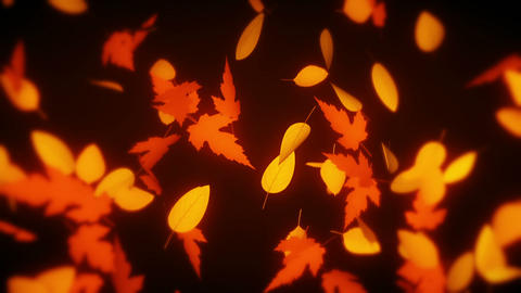 Maple Leaves Animation