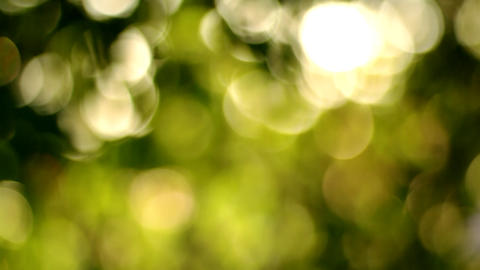 Beautiful Bokeh shot through Floral Foliage with Silky Smooth Slow Tilt Footage