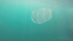 Jellyfish under water Footage