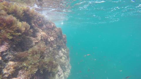 World Under Water 4K 0