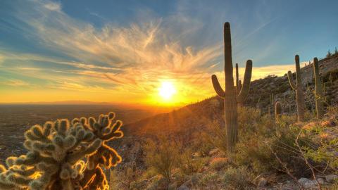 Cactus Sunset 1 Footage