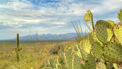 Cactus Clouds 1 Footage