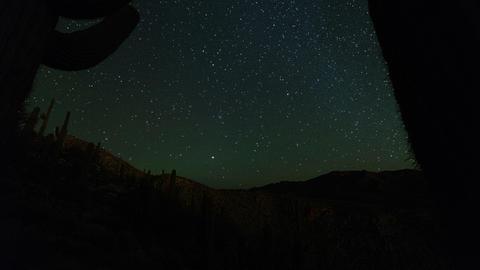 Cactus Stars 1 Footage