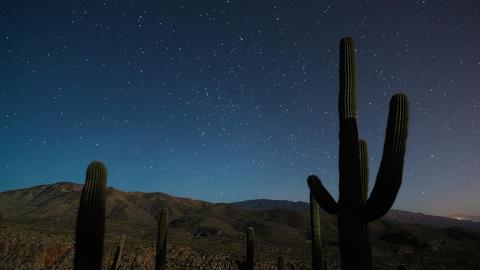 Cactus Stars Moonset 1 stock footage