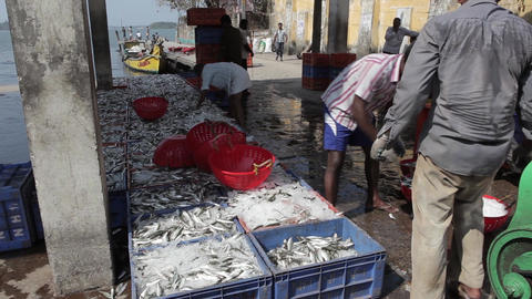 Indian Fishers On The Sea Coast India 1