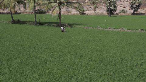 Rice Field In Hampi India 1