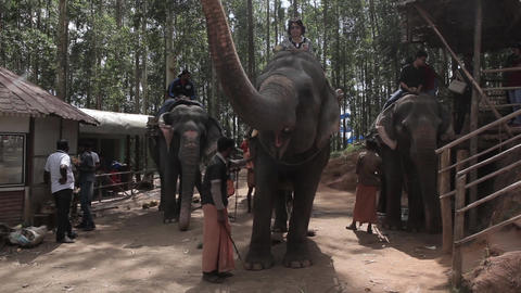 Indians animals – elephants Footage