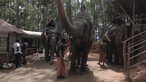 Indians animals – elephants Footage